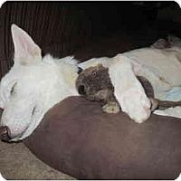 Adopt A Pet :: Sundance - Green Cove Springs, FL