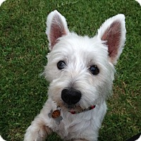 Adopt A Pet :: Max W - Carrollton, TX