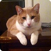 Adopt A Pet :: Sebastian - Bentonville, AR