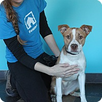 Adopt A Pet :: Girlie - Chicago, IL