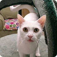 Adopt A Pet :: Midge - Naples, FL