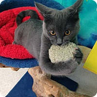 Adopt A Pet :: Amy - Newport Beach, CA