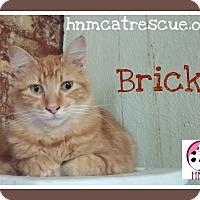 Adopt A Pet :: Brick - Fairbury, NE