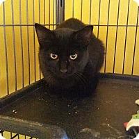 Adopt A Pet :: Bedelia - Putnam, CT