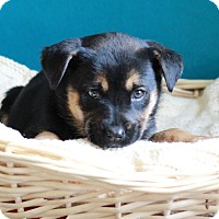 Adopt A Pet :: Lola - Waldorf, MD