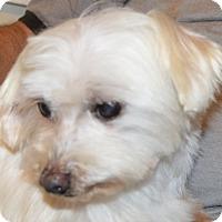 Adopt A Pet :: Parker - Prole, IA