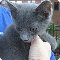 Adopt A Pet :: Ollie - Germantown, MD