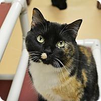 Adopt A Pet :: India - Springfield, IL