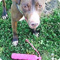 Adopt A Pet :: Finnick - Lake Odessa, MI
