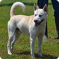 Adopt A Pet :: Charlie - Lebanon, MO