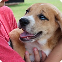 Adopt A Pet :: SUN DANCE - Harmony, Glocester, RI