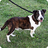 Adopt A Pet :: Buck - Joliet, IL