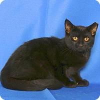 Adopt A Pet :: BERNIE - Gloucester, VA