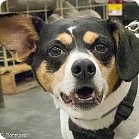 Adopt A Pet :: Ninja - Loudonville, NY