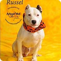 Adopt A Pet :: Russel - Topeka, KS