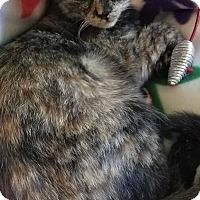 Adopt A Pet :: Reese - Glen Mills, PA