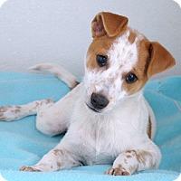 Adopt A Pet :: Rosie - Sudbury, MA