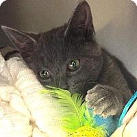 Adopt A Pet :: Priscilla - Flower Mound, TX