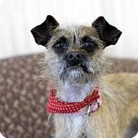 Adopt A Pet :: Katlin - Fremont, NE