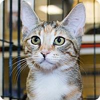 Adopt A Pet :: Sprinkles - Irvine, CA
