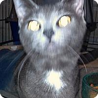 Adopt A Pet :: Axel - Saint Albans, WV