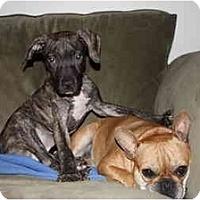 Adopt A Pet :: Kane - Reisterstown, MD