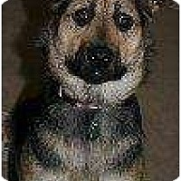 Adopt A Pet :: Pepi - Alliance, NE