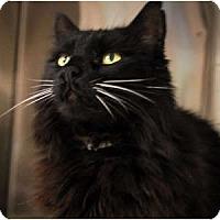 Adopt A Pet :: Tiki - Lunenburg, MA
