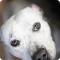 Adopt A Pet :: Lovebug - Reisterstown, MD