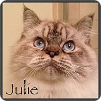 Adopt A Pet :: Julie - Beverly Hills, CA