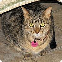 Adopt A Pet :: Victory - Grand Rapids, MI