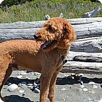 Adopt A Pet :: Rusty - Gig Harbor, WA