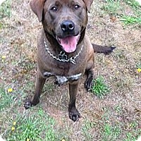 Adopt A Pet :: Dex - Gig Harbor, WA