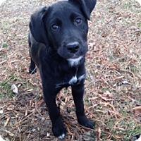 Adopt A Pet :: Gabriel - Richmond, VA