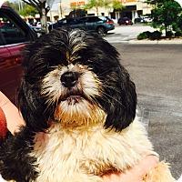Adopt A Pet :: Newman - St. Petersburg, FL