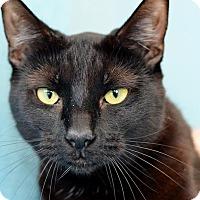 Adopt A Pet :: Nyx - Oviedo, FL