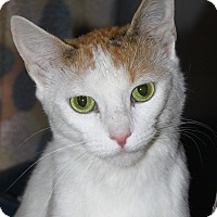 Adopt A Pet :: Cinnamon - North Branford, CT