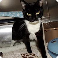Adopt A Pet :: Sami - Long Beach, WA