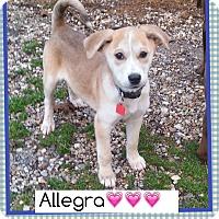 Adopt A Pet :: Allegra (Pom) - Hagerstown, MD
