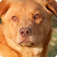 Adopt A Pet :: KAYDEN(TWO GREAT BREEDS!! WOW! - Wakefield, RI