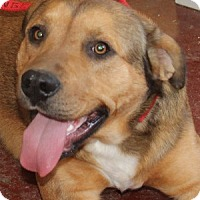 Shepherd (Unknown Type) Mix Dog for adoption in Savannah, Missouri - Lucas