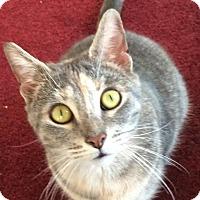 Adopt A Pet :: Abby - Charlotte, MI