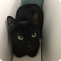 Adopt A Pet :: Joan Jett - Medina, OH