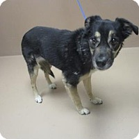 Adopt A Pet :: TARA - Reno, NV