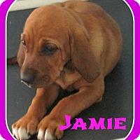 Adopt A Pet :: Jamie - Clear Lake, IA