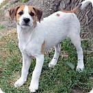 Adopt A Pet :: Drew