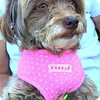 Adopt A Pet :: Penny-ADOPTION PENDING - Boulder, CO