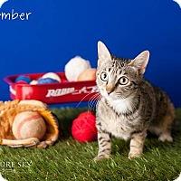 Adopt A Pet :: Amber - Glendale, AZ