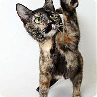 Adopt A Pet :: Anastasia - Luling, LA