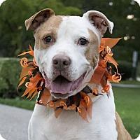 Adopt A Pet :: Jax - Elyria, OH